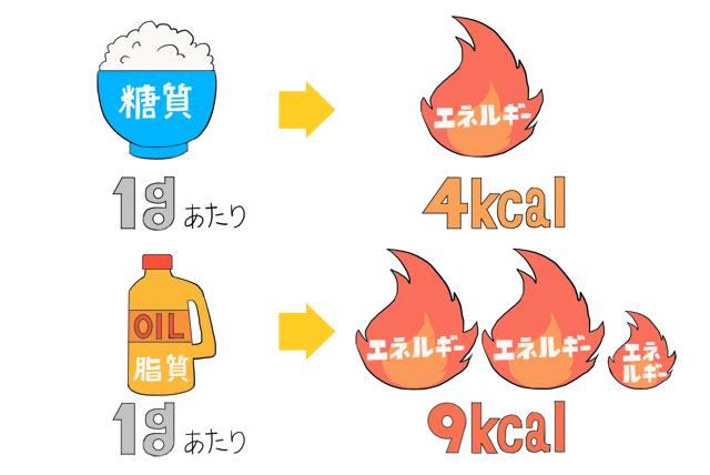 糖質は1gあたり約4kcal、脂質は9kcal。脂質はとても効率の良いエネルギー源。